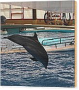 Dolphin Show - National Aquarium In Baltimore Md - 1212215 Wood Print