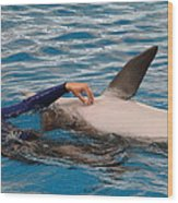 Dolphin Show - National Aquarium In Baltimore Md - 1212231 Wood Print by DC Photographer