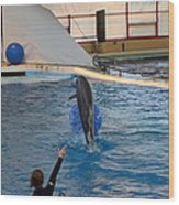 Dolphin Show - National Aquarium In Baltimore Md - 121239 Wood Print by DC Photographer