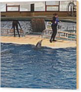 Dolphin Show - National Aquarium In Baltimore Md - 121246 Wood Print by DC Photographer