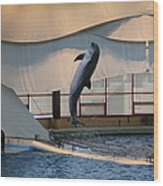 Dolphin Show - National Aquarium In Baltimore Md - 121255 Wood Print by DC Photographer