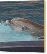 Dolphin Show - National Aquarium In Baltimore Md - 121261 Wood Print by DC Photographer