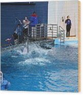 Dolphin Show - National Aquarium In Baltimore Md - 121292 Wood Print