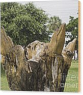 Dolphin Tree In Melbourne Beach Florida Wood Print by Allan  Hughes