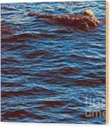 Dolphin Visitors Wood Print