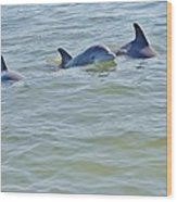 Dolphins 2 Wood Print