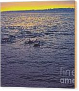 Dolphins At Sunset Wood Print
