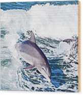 Dolphins Jumping Wood Print