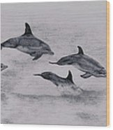 Dolphins Wood Print by Lucy D