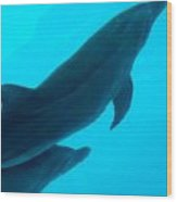 Dolphins Photo Wood Print