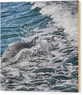 Dolphins Smile Wood Print