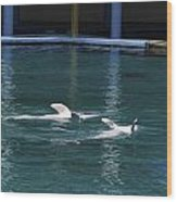 Dolphins Swimming Upside Down As Part Of Show Wood Print