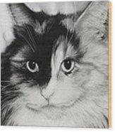 Domestic Cat Wood Print by Natasha Denger