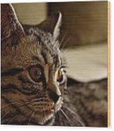 Domestic Cat Wood Print