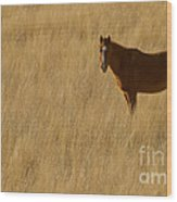 Domestic Horse   #5332 Wood Print