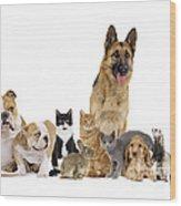 Domestic Mammal Pets Wood Print