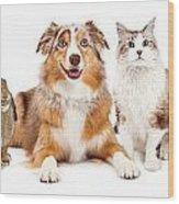 Domestic Pet Composite Wood Print