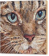 Domestic Tabby Cat Wood Print