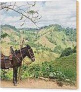 Donkey And Hills Wood Print