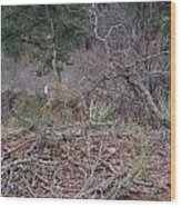 Donkey Deer Feeding Wood Print