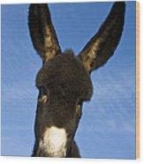 Donkey Foal Wood Print