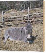 Donkey In Hay Wood Print