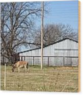Donkey Lebanon In Oklahoma Wood Print