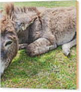 Donkey On Grass Wood Print