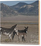 Donkeys In The Colorado Rockies Wood Print