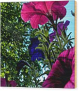 Donna's Blooming Petunias Wood Print