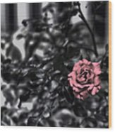Donna's Rose Wood Print