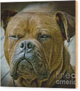 Don't Be Deceived Wood Print by Karen Lewis