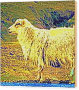 Dont Be Sheep, You Said, But I Just Can't Help It Wood Print