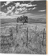 Don't Fence Me In - Black And White Wood Print