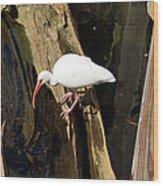 White Ibis Bird Wood Print