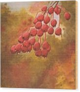 Door County Cherries Wood Print