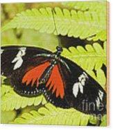 Doris Longwing Butterfly Wood Print