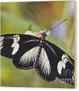 Doris Longwing Butterfly Wood Print