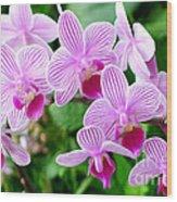 Doritaenopsis Flower Wood Print
