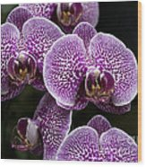 Doritaenopsis Leopard Prince 2651 Wood Print