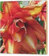 Double Asiatic Lily Named Cocktail Twins Wood Print