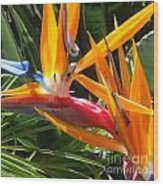 Double Bird Of Paradise - 1 Wood Print