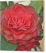 Double Blossom Camelias Wood Print