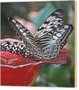 Double Butterfly Wood Print