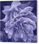 Double Columbine In Blue Wood Print