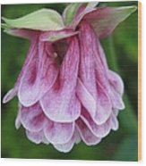 Double Columbine Named Pink Tower Wood Print