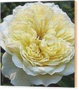 Double Cream Rose Wood Print