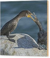 Double-crested Cormorants Wood Print