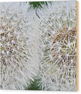 Double Dandelion Wishes Wood Print