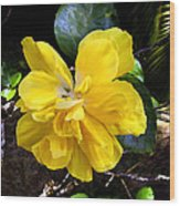 Double Hibiscus Costa Rica Wood Print